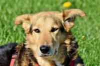 犬に遺産は相続できるの?遺言書の効力について簡単解説!