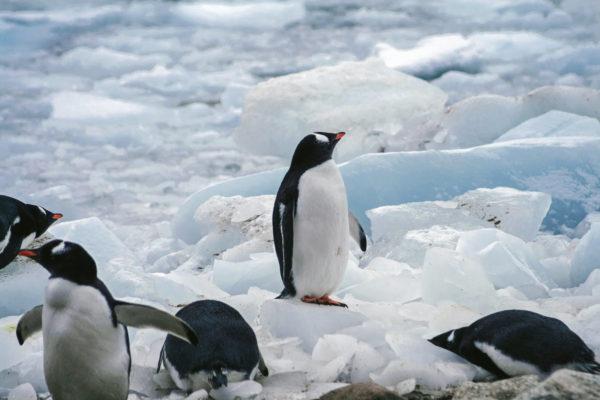 南極では風邪をひかないってホントなの?